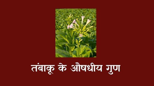 तंबाकू के औषधीय गुण